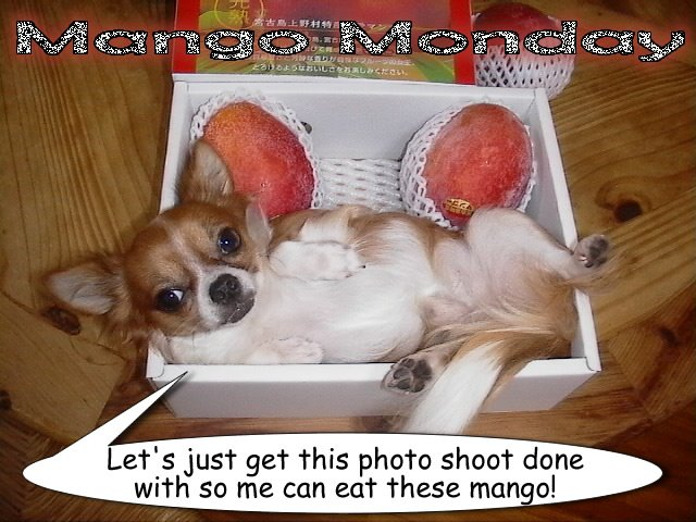 From TigerSan's PhotoBlog: Mango Monday: Let's just get this photo shoot done with so me can eat these mango!