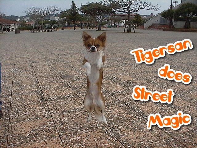 From TigerSan's PhotoBlog: Tigersan does Street Magic