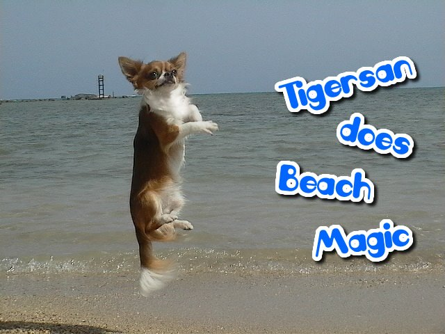 From TigerSan's PhotoBlog: Tigersan does Beach Magic