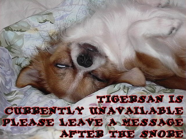 From TigerSan's PhotoBlog: Tigersan is currently unavailable... Please leave a massage after the snore.