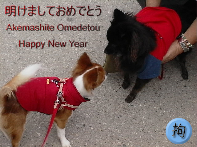 From TigerSan's PhotoBlog: Akemashite Omedetou: Happy New Year