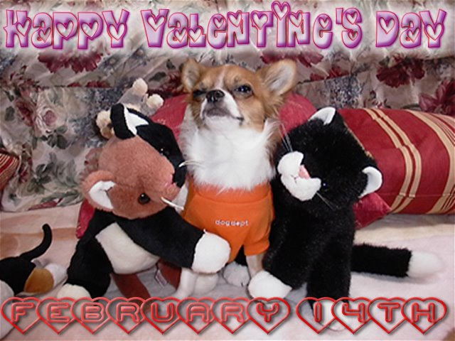 From TigerSan's PhotoBlog: Happy Valentine's Day