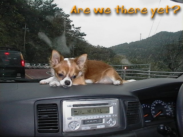 From TigerSan's PhotoBlog: Are we there yet?