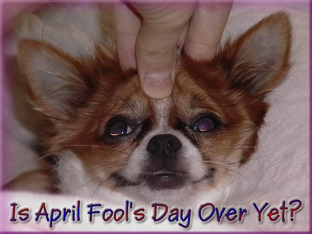 From TigerSan's PhotoBlog: Is April Fool's Day Over Yet?