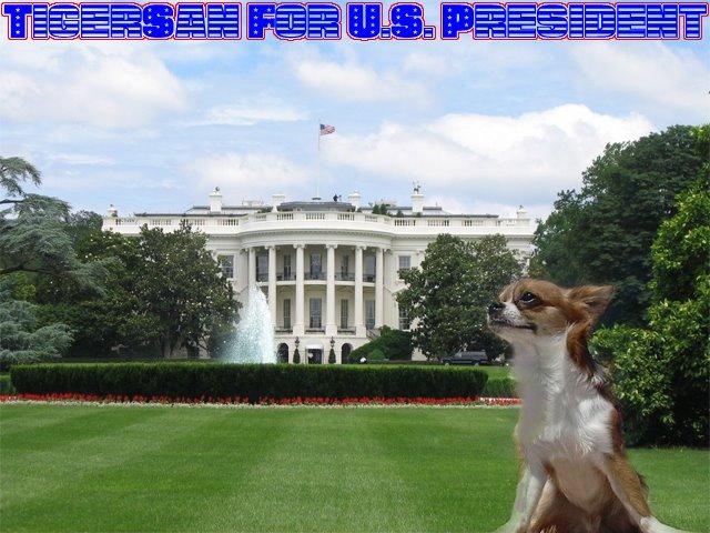 From TigerSan's PhotoBlog: TigerSan for U.S. President