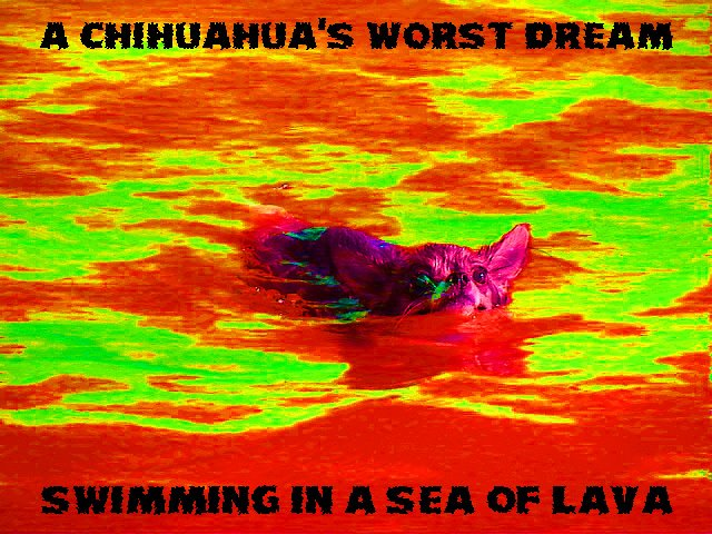 From TigerSan's PhotoBlog: A Chihuahua's Worst Dream... Swimming in a Sea of Lava