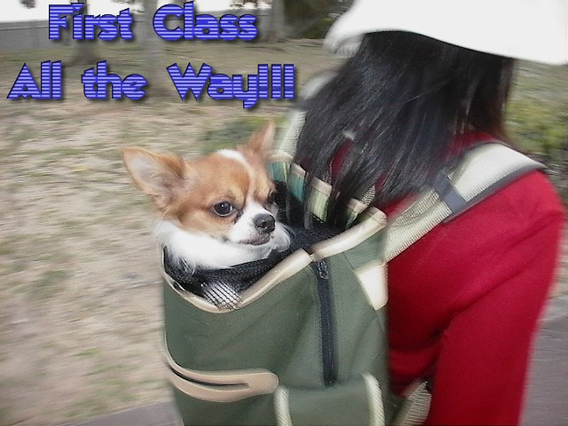 From TigerSan's PhotoBlog: First Class all the way!!!