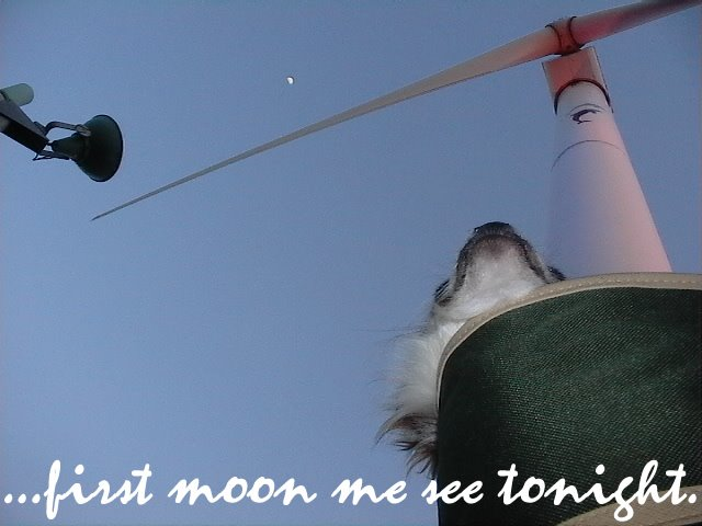 From TigerSan's PhotoBlog: ...first moon me see tonight.