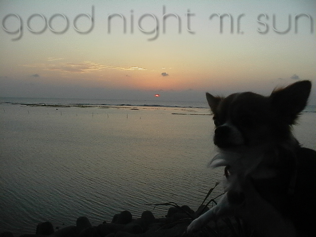 From TigerSan's PhotoBlog: good night mr. sun
