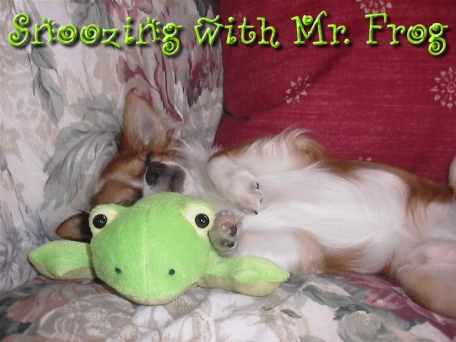 From TigerSan's PhotoBlog: Snoozing with Mr. Frog