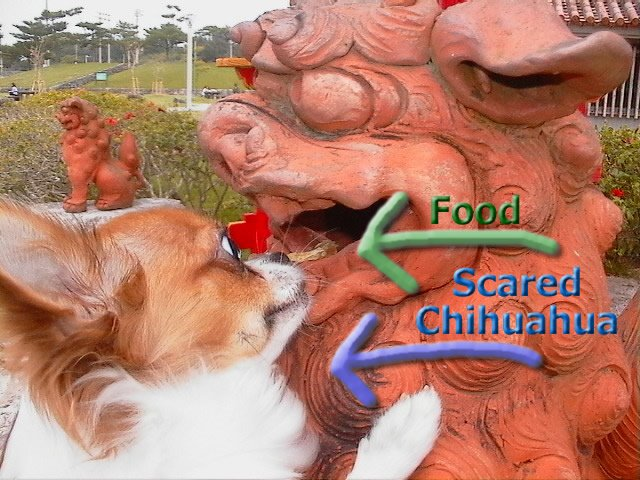 From TigerSan's PhotoBlog: food... scared Chihuahua!