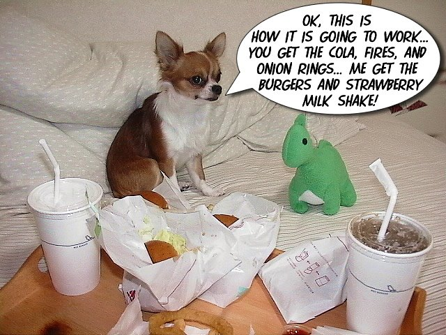 From TigerSan's PhotoBlog: Ok, this is <br />how it is going to work... You get the cola, fires, and onion rings... Me get the <br />burgers and strawberry milk shake!