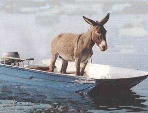 A Boat Without a Paddle