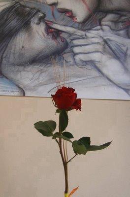 La mia rosa di S.Jordi