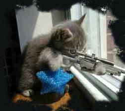 Gato con pistola