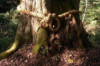 Sacred tree, Gongen Falls