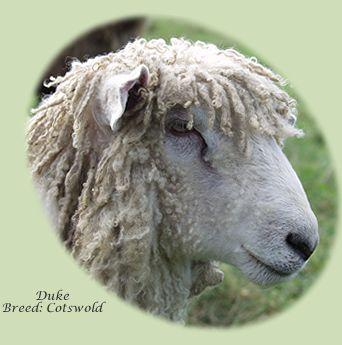 Sheep dating website