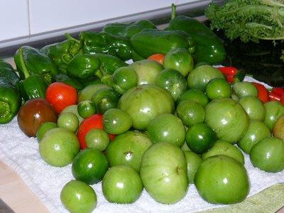 joder con las tomateras lo que ha echado este año, será la suerte del principiante