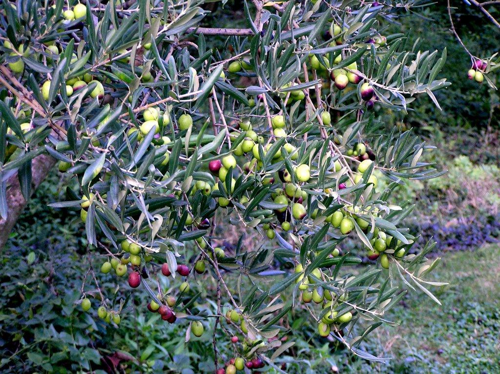 Curieux jardin octobre 2005 for Jardin octobre