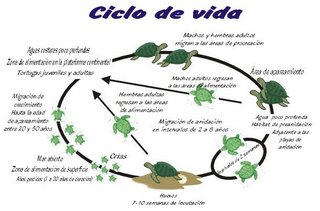 Susanita 39 s world a vida d ficil das tartarugas marinhas for Vivero definicion
