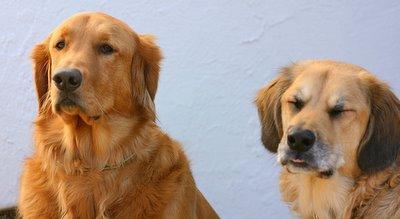 Max e amigo