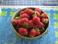 Last of the strawberries