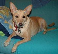 Max (Dog)