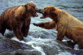 Bears In A Pool