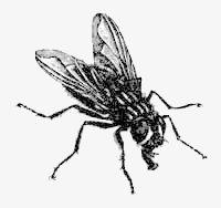 'Por si las moscas' es el blog recién creado por Dani Basteiro y Laura Caielles