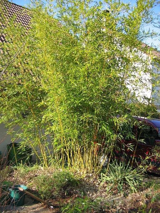 Jardin de marguerite le bambou l - Jardin de bambou cannes ...
