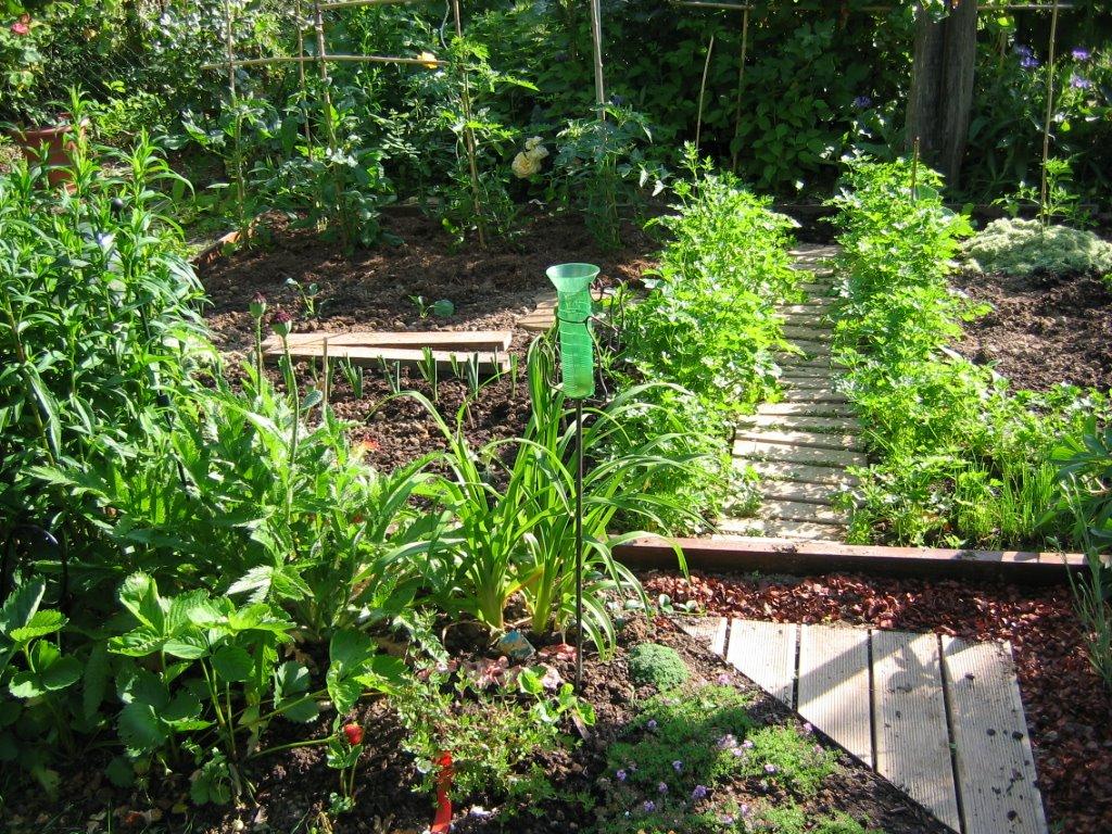 Jardin de marguerite le persil parsley - Graine de persil ...