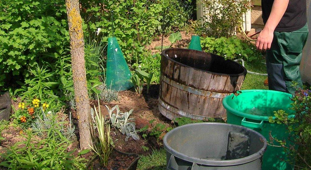 Jardin de marguerite black mort nettoyage de printemps for Nettoyage jardin printemps