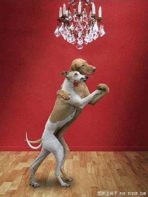 Canine tango