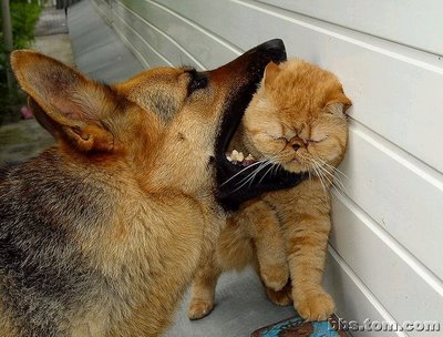 Love bite? The Dog Catches a Cat