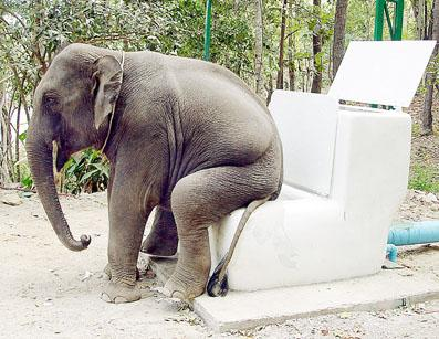 Elephant toilet
