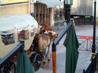 イタリア村の花馬車
