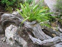 Tree roots, Kaitoke regional park, NZ. Copyright: WebWeaver Productions