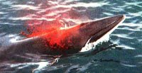 whale spouting blood after being harpooned