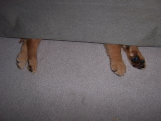 Sleeping Under the Couch