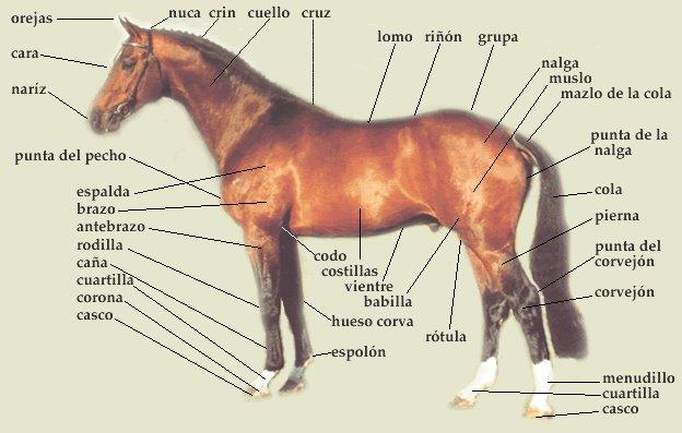 el mundo de los caballos