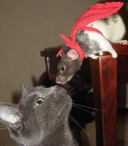 Funny cat mouse