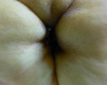 a quince's bottom