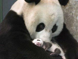 from giant-panda.com