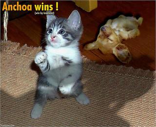 los gatos vencerán