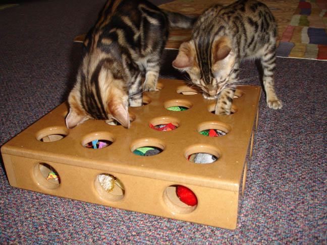 Peek A Prize Toy Box : The adventures of tanjiro uschi swirl vladimir peek a