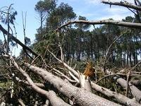 Uruguay fallen trees
