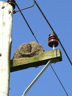 Uruguay typical birds, hornero nest