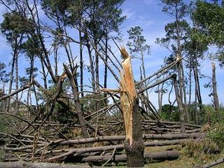 Uruguay wood after the storm