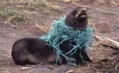 Keepin' it Clean- Help Stop Ocean Pollution!