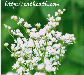 picture of white flowers